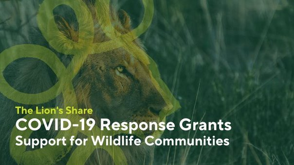 I am pleased to announce @LionsShareFund's call to support communities in #Africa, #Asia & #LatAm on the frontlines of conservation during #COVID19 & to #BuildForwardBetter 4 a more equal, inclusive, #sustainable, safer & healthier planet. Here is more: https://t.co/yLExdsdaw9 https://t.co/sBv4VejInO