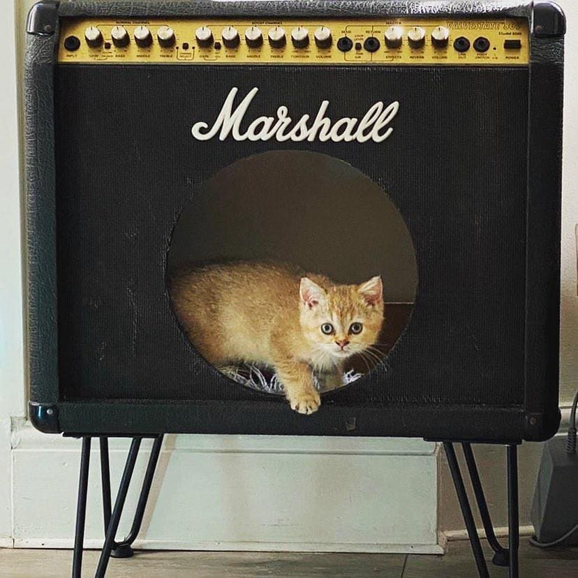 You've heard of cats on amps, but what about cats IN amps 👀   Photo: jfulleruk #liveformusic https://t.co/pr7pnd0Ace