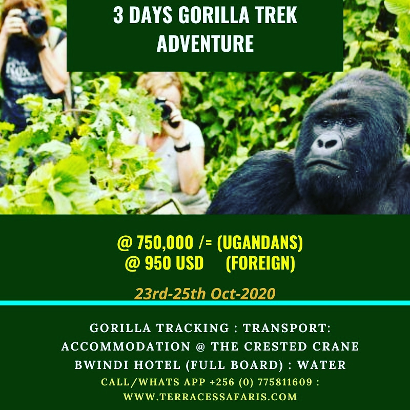 Adventure in the wild never gets old,join our next trip to Bwindi on 23rd October 2020.#trekking #Gorillas #Gorillatracking #VisitUganda #vacation https://t.co/u49AziOuBi