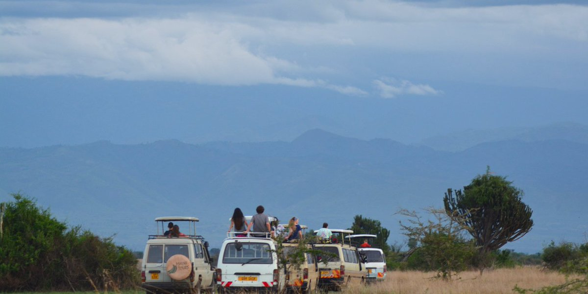 Uganda is the only country in Africa where you can observe lions prowling the open plains in the morning and track the chimpanzees in the afternoon. #africa #visituganda #eastafrica #cultoursandsafaris #safariuganda #tourism #travelphotography #wildlife #travel #nature #explore https://t.co/onZJ0CWXRc