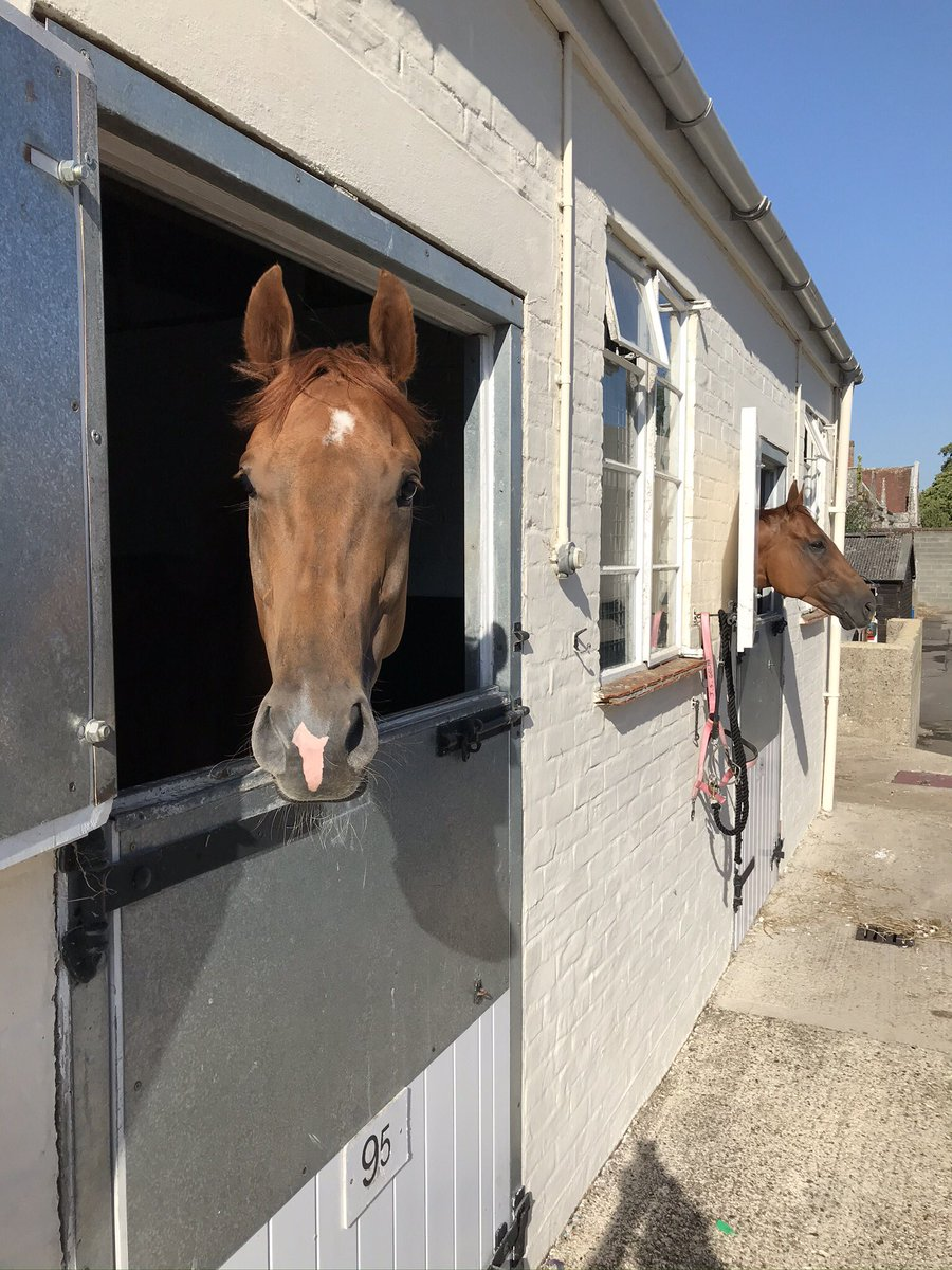 We're @DoncasterRaces today where we run @JDeltaRacing's Call Me Ginger who was slightly unlucky @ChesterRaces last time, hopefully he can go one better than his brother Primo's Comet did yesterday, @StottKevin rides!