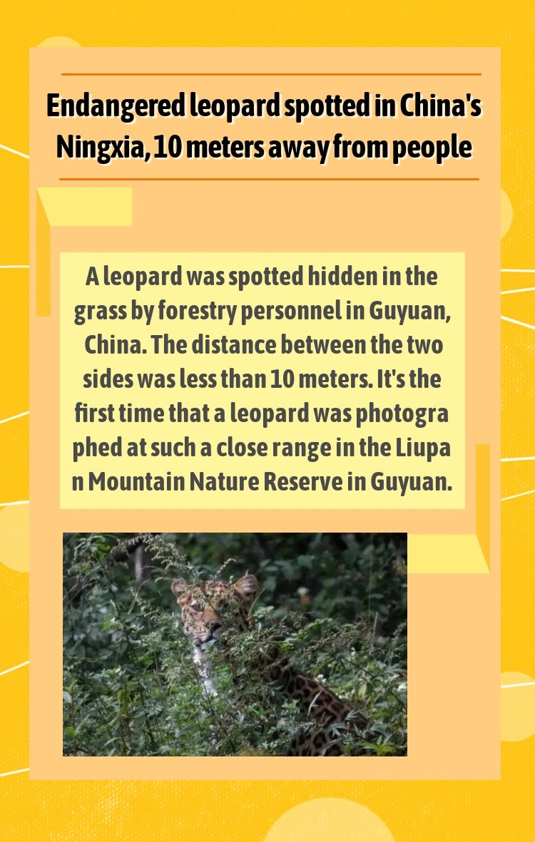 Endangered leopard spotted in China's Ningxia, 10 meters away from people.#ningxia https://t.co/NYuAeeCJ6c