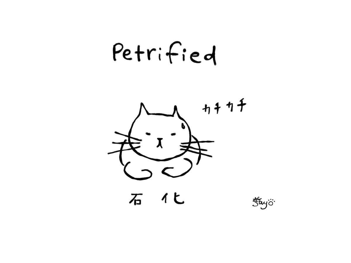 ほぼ毎日1つ#現場で使える獣医英語日本語:身がすくむほど怖がる / 恐怖で固まる・石化する英語:Petrified#獣医英語 #獣医英会話 #動物病院 #英会話 診察室で恐怖のあまりカチカチに固まっちゃう子、そんな様子を表す際よく使われる単語が『Petrified』
