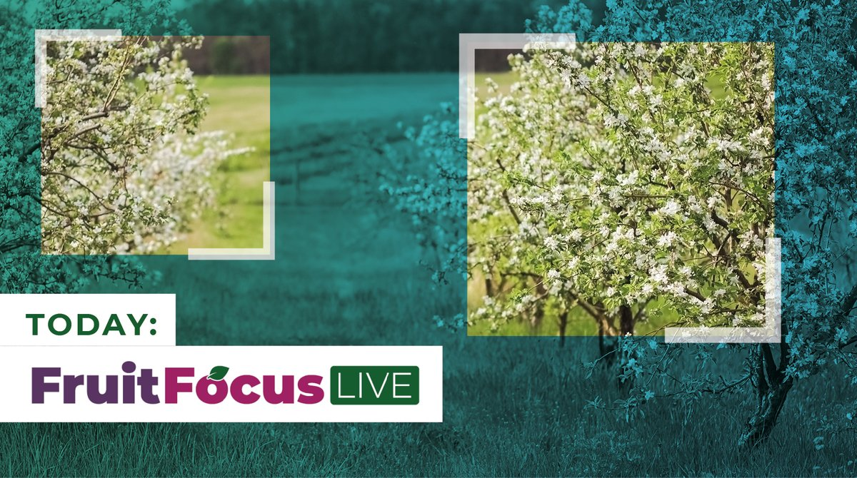 It's exciting to see all the activities happening for #FruitFocusLive today!   Are you participating in #FFLive20 webinars with our partners @AgrovistaFruit? We welcome enquiries from #orchards interested in harnessing our #AI technology to monitor apple blossom. #fruitfarm https://t.co/zrczswKjzf