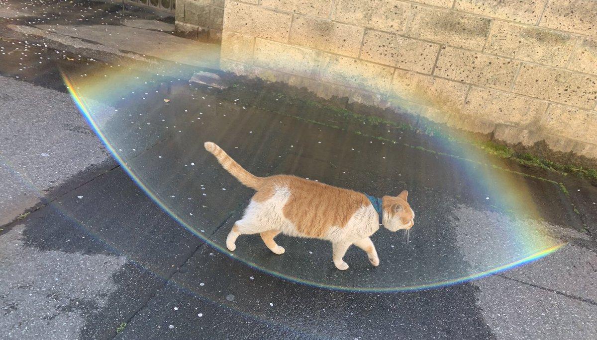 橘貓使出了彩虹防護罩! Ehj6mdNVoAAvCI_