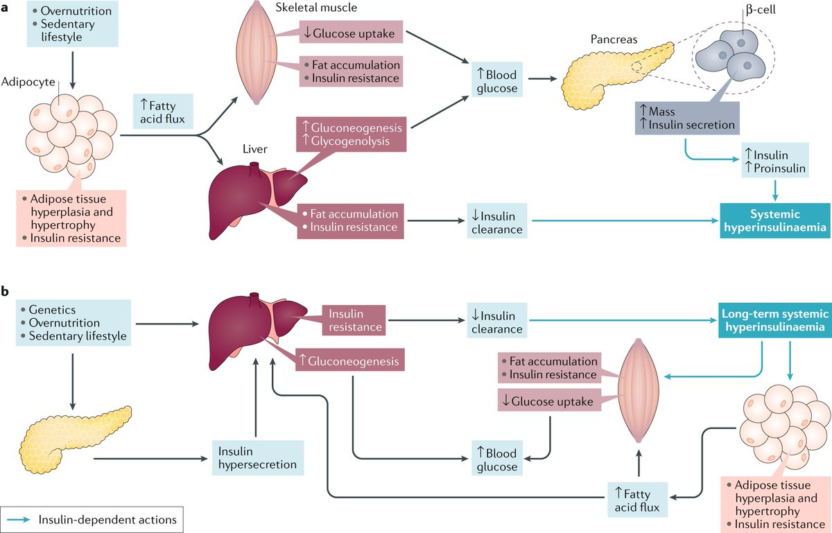 test Twitter Media - New Review online! E Gallagher & D LeRoith discuss insulin & #insulinreceptor signalling in #cancer, contextualising the realisation that #hyperinsulinaemia may contribute to therapeutic failures.   https://t.co/WzNKsuZd1h  @NatResCancer @TischCancer @IcahnMountSinai #diabetes https://t.co/NqwQwBJVzr