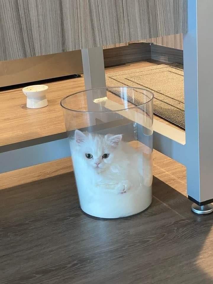 貓是液體 EhjKLueVkAARXB1