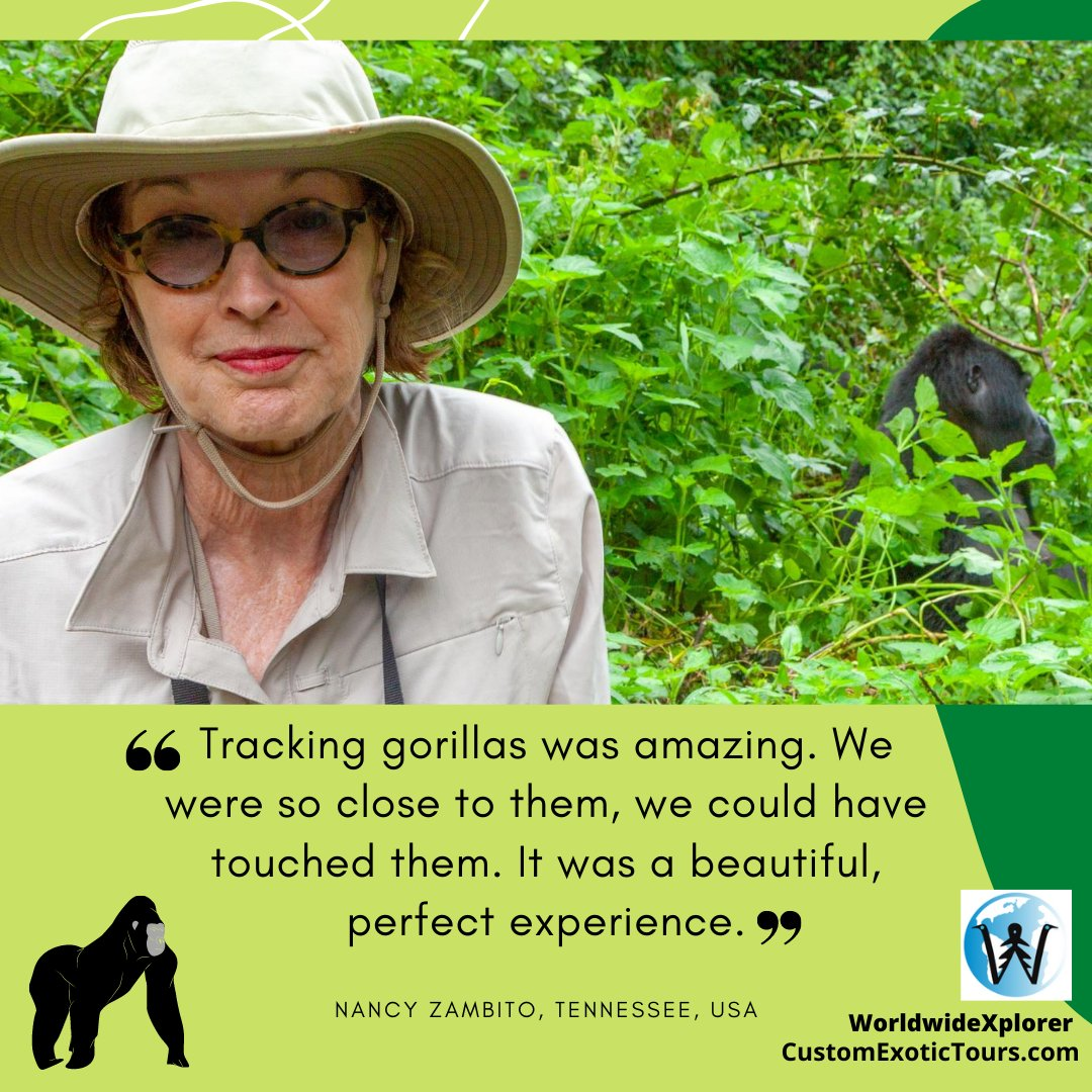 Dream of seeing wild gorillas? We make it happen, contact us!  #gorilla #gorillahike #gorillatrek #primate #travelwithme #vacationwithme #Africawithme #AfricaTravel #Ugandatravel #safariwithme #safari #safarigorilla #travelUganda #ThisisAfrica #gorillasinthemist #gorillasafari https://t.co/iAdUjQHXhj