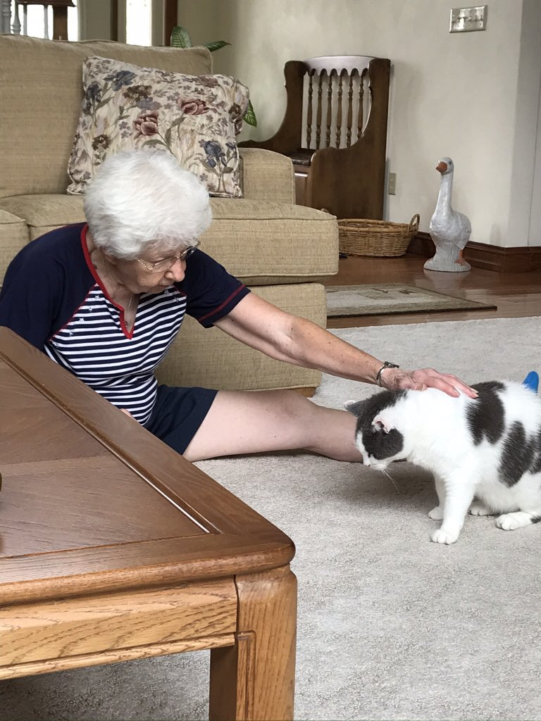 ❤️Thursday's yoga edition of the Midwest report: Foggy, then overcast, touching 80 this afternoon.  Reach, Gran, reach! Gold star from the VET for Gran, now we gotta keep her going! @PincyCat @LordGraydon @JoyOfCats @Me_Me_cat @Aloo_Oz @davyslala https://t.co/Im5C12s65o