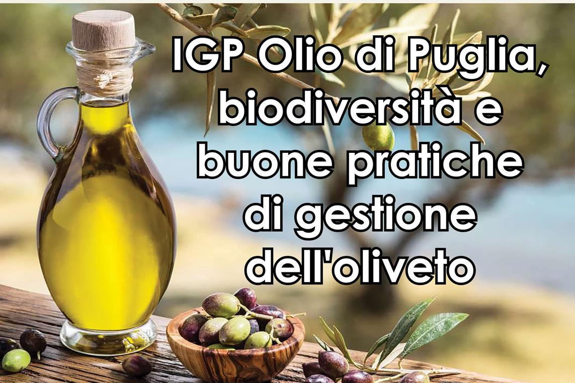 """📍 Oggi, giovedì 10 settembre, alle ore 18.00 presso Masseria Madonna dell'Arco ci sarà l'evento """"IGP #Olio di Puglia, #biodiversità e buone pratiche di gestione dell'#oliveto"""".🌳  #WeAreinPuglia #Puglia365 #VisitMartinaFranca #Puglia #ValledItria #viaggiareinpuglia #gal https://t.co/ngXbq8nL9k"""