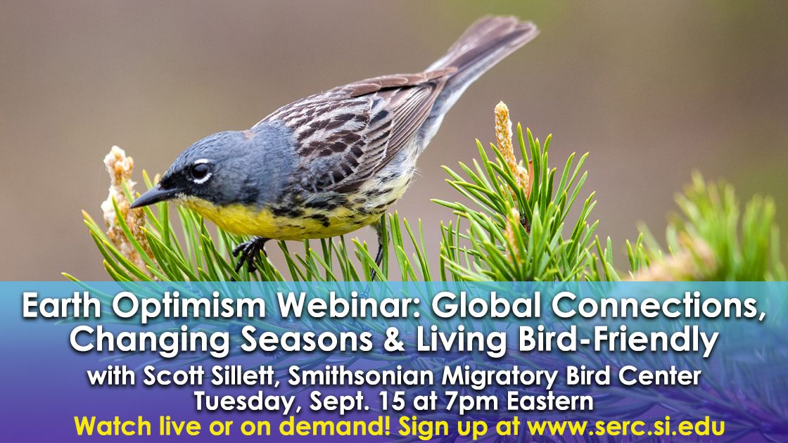 Curious about birds & how to help save them? 🐦 Tune in Sept. 15 for a #free @SmithsonianEnv webinar with @SMBC's Scott Sillett. Learn about climate change's impact on birds, how tracking tech is being used in research & sustainable consumer choices.  https://t.co/0TvWgTOij7 https://t.co/ZNQ3YU1JTl