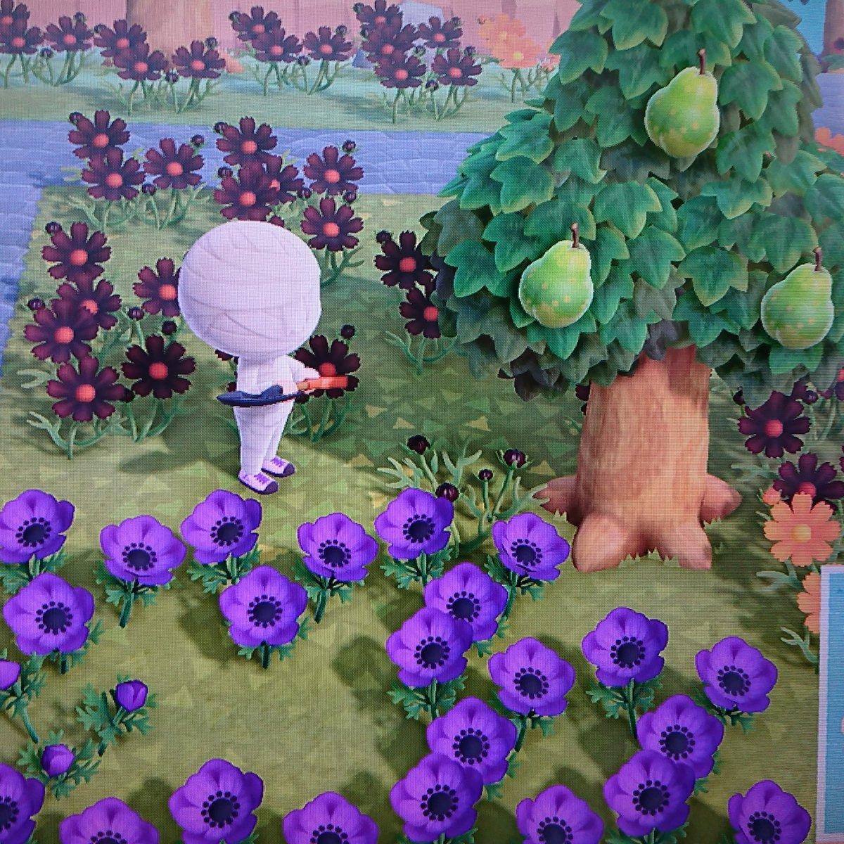 紫 あつ の パンジー 森