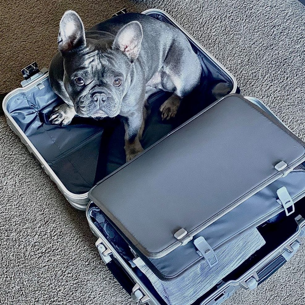 The 19 Degree Aluminum Carry-On with spacious interiors for your most loved valuables. 📷: @b_and_b_frenchies #PerfectingTheJourney https://t.co/zr1gGZ5dYP