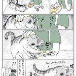 猫はなんでもおもちゃにしてしまう?ドリブルしたいネコ!