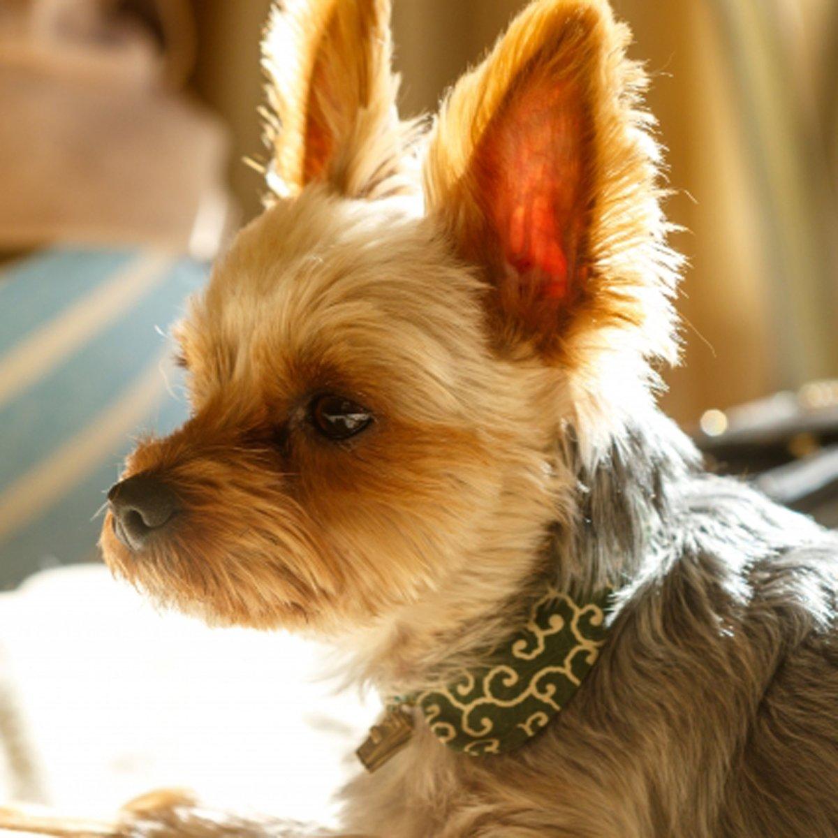 かわいいわんちゃん♪ #ハニーペット #HONEYPET #honeypet #犬 #ふわもこ部 #愛犬 #わんこ #いぬすたぐらむ #いぬ #ペット #犬のいる暮らし #ワンコ #イヌ #いぬのきもち #こいぬ #dog #dogsofinstagram #puppy #pet  #instagood #follow #followme https://t.co/VjeQhI8hrf
