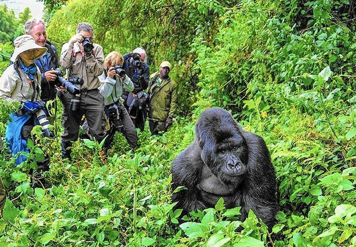 Rwanda has the closest gorilla park from her international Airport. If you have a few days for a gorilla trek, it is the best option for a safari. Click link for details 👇 https://t.co/vnV2r5Oj0a #Rwandagorillasafaris #Rwandatour #gorillatreks https://t.co/NzsPRGKt8M