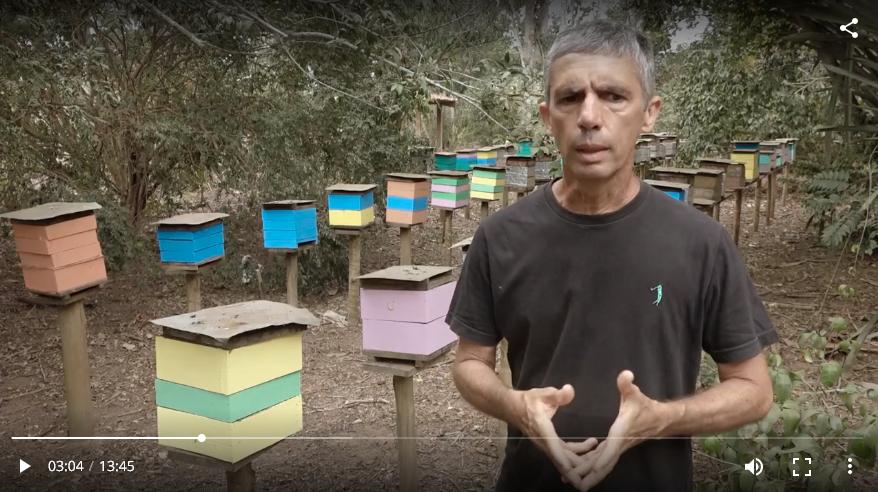 Uma viagem deliciosa e cheia de aprendizado pela fascinante rota da criação de abelhas sem ferrão no Brasil. Assista: https://t.co/5iHnFa3AbK https://t.co/OorpboY8mA