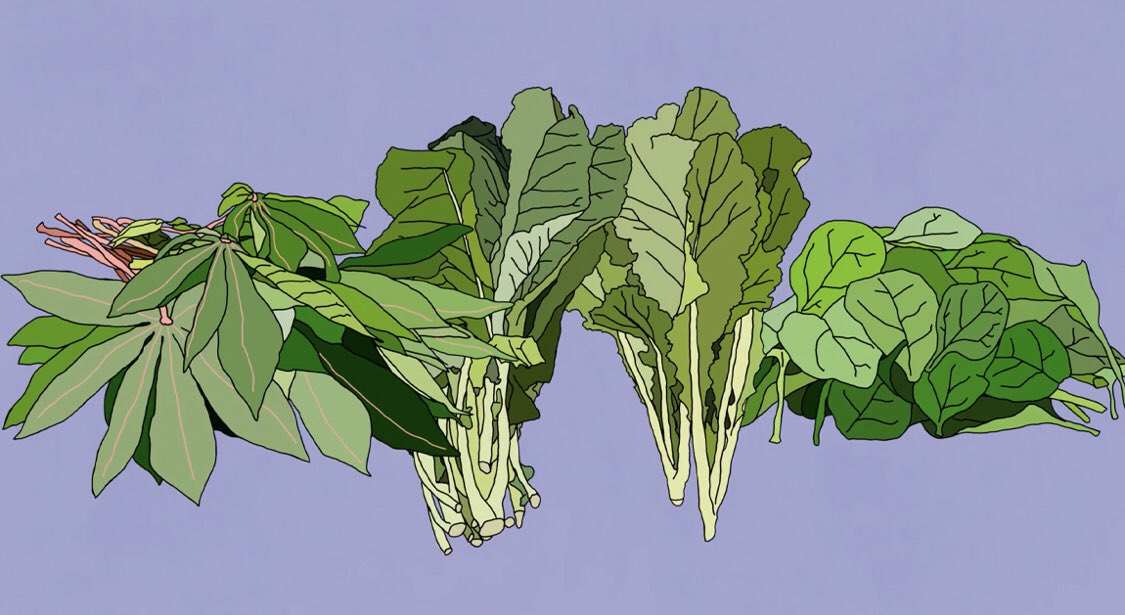 The weather is cooling down which means it's time to get ready for greens! What's #gottobenc greens are you looking forward to this fall? #collards #cabbage #spinach #turnips @NCAgriculture https://t.co/8WfOnyEkxe