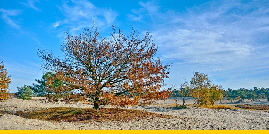 In de herfst, de winter, de lente of de zomer: een wandeling door bos en hei is altijd een goed idee. De mooiste gebieden in Nederland: https://t.co/ygjUZnYfun https://t.co/Gx7agDaMqO