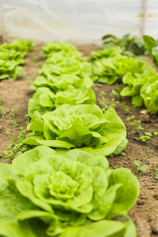 🥕🥒 Nuestras #verduras y #hortalizas son tran frescas que solo les falta hablar. 🍅🥬  ¿A qué esperas para conocer la huerta madrileña? ▶️ https://t.co/2KiZa7NPud  #ComunidaddeMadrid #alimentación https://t.co/XsoBmqQFbd