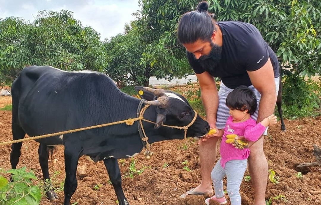 'K.G.F' star Yash has family time in the farmhouse – Latest English News   Absolute India News https://t.co/XEd8wiqyMV  @TheNameIsYash #radhikapandit #nimmaRP https://t.co/YCAbEAnsWZ