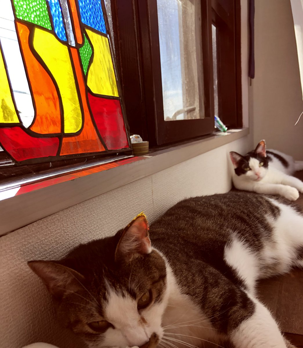 #ひとこと朝宣言 9/12 Σήμερα δουλεύω. 今日は外出支援の仕事。・🇬🇷宿題と単語、easy Greek音読・🇨🇳読解◯&リスニング問題&単語・duo暗唱、dmm英会話・ヨガ朝勉は🇨🇳読解問題のみ。写真はカーテンと窓の間の猫🐈