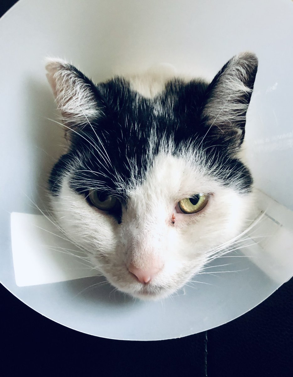 This is what happens when you pick your scabs… #ConeOfShame