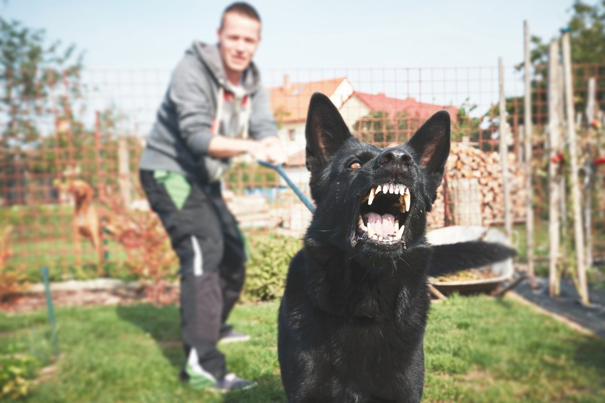 Can I Use a Dog for Self-Defense?  👉 https://t.co/0nmNfTgMZN #dog #personalinjury https://t.co/svWk0DGn18