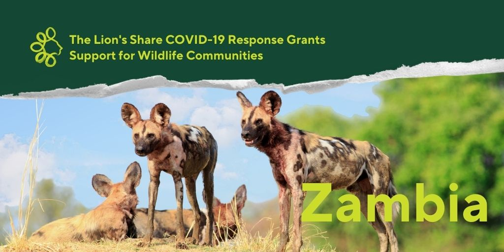 #TheLionsShare will be funding an initiative in #Zambia to help mitigate the rise in #wildlife #poaching brought on by the loss of #tourism income during the pandemic. The project will support communities to implement climate-smart #aquaculture & water-saving #solar irrigation. https://t.co/UzEldCWJeT