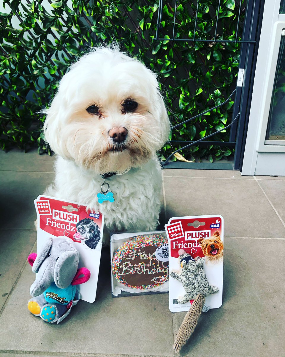 Happy 3rd birthday to our little angel. 🥳  His grandma has presents waiting for him after lockdown. 🎁  #groot #birthday #dog #dogsofinstagram #maltese #malteseofinstagram #shihtzu #shihtzusofinstagram #furbaby #dogtoys #birthdayboy #birthdaypresent #dogtreats #dogcookies https://t.co/V6bMAWa9bb