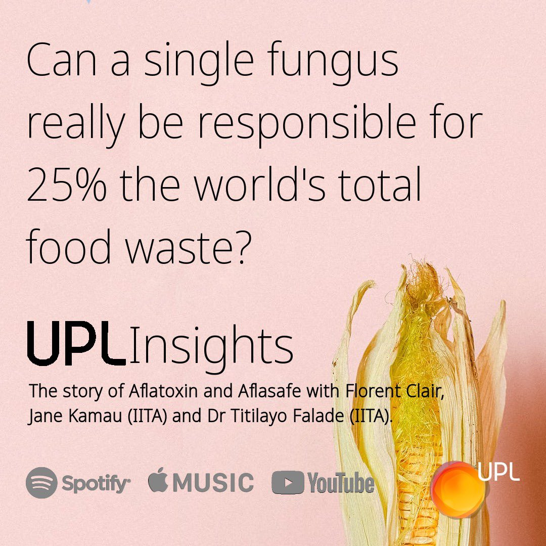 In this episode of #UPLInsights, we're looking at Aflatoxins, silent killer threatening food crops. Florent Clair is joined by Dr. Jane Kamau, Commercialisation & Agribusiness Manager at IITA, & Dr Titilayo Falade, Associate Scientist, IITA. https://t.co/NitoP3qEkG #OpenAg https://t.co/SPiTMCLcHu