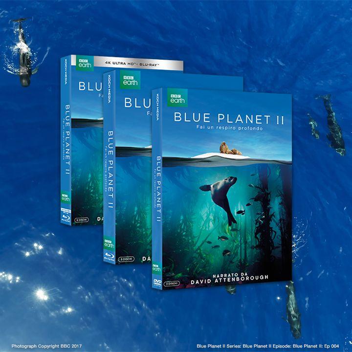 In occasione del #PlasticBagFreeDay, il miglior metodo per ricordarsi di proteggere i nostri mari è quello di ammirarne la bellezza!Tuffatevi nel profondo degli abissi di #TheBluePlanetII @BBCEarth: in DVD, Blu-ray e 4K Ultra HD con un packaging 100% green certificato @FSC_IC. https://t.co/2jbWn8rb0V
