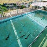 むろと廃校水族館が子供の頃の夢の場所みたい!プールにサメが泳いでる!