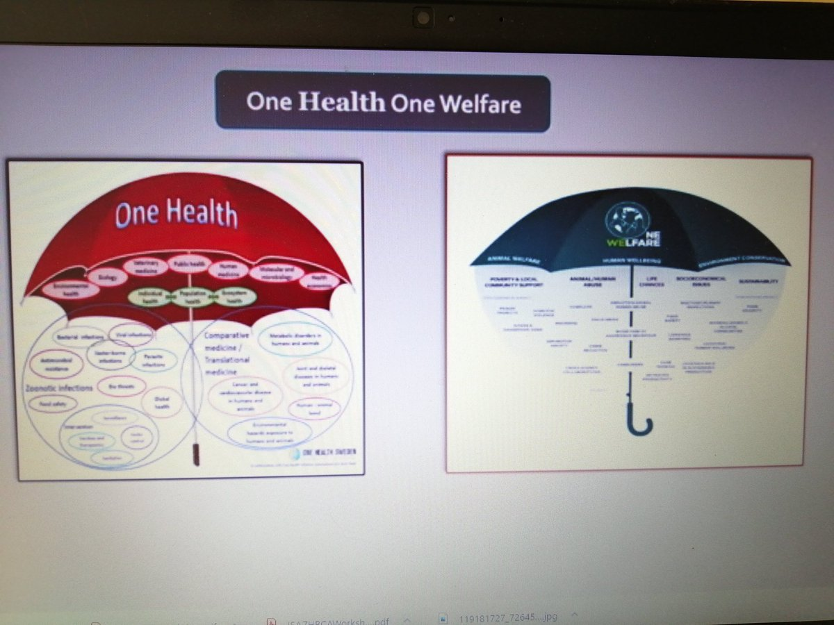 Great to see #OneWelfare included in the opening keynote address #SCAS2020 @OneWelfare @OneWelfareWorld #onehealth #AAI #animalcompanionship #AnimalWelfare https://t.co/RyzS2Mi6WC