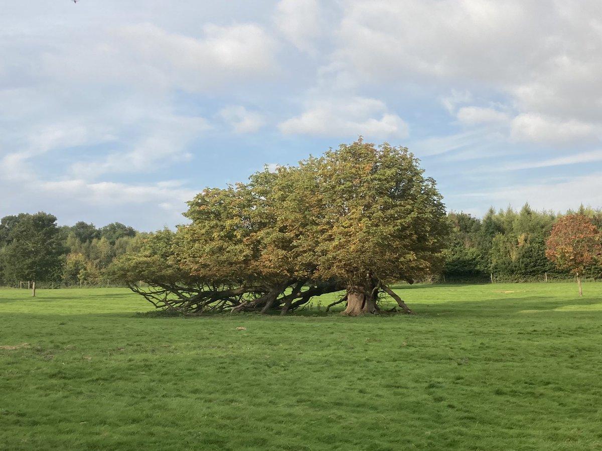 Arboreal windsock @LothertonHall https://t.co/sMF77QtQz8