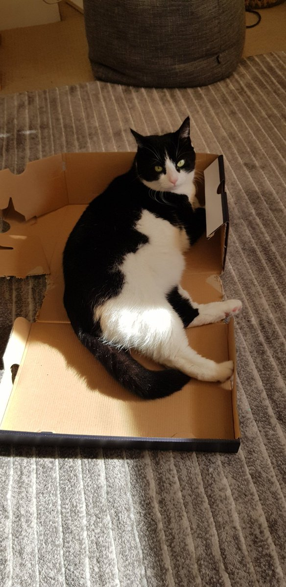 Wishing everyone a happy #catboxsunday on this beautiful day in my customised box☀️🦋🌼🌴 https://t.co/HoBIhBDv5s