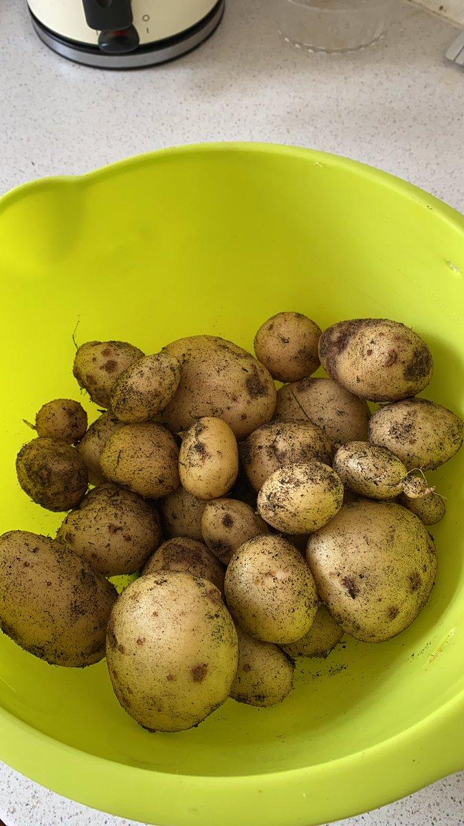 I grew potatoes!