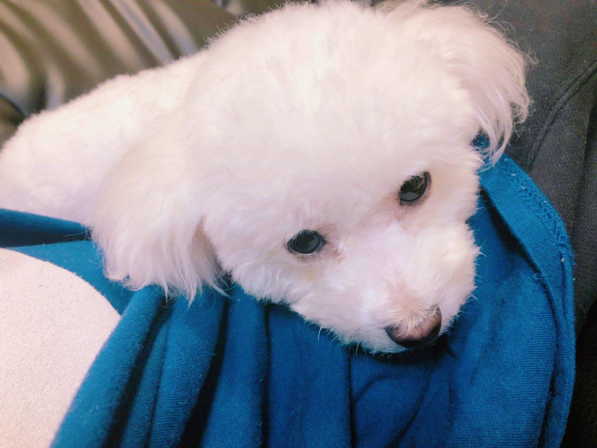 【ほのぼの日記】愛犬のたぴちゃんをトリミングしてきた✨【ころん】カメラ たぴちゃんトリミングしたらマジで可愛すぎたので流石に動画にしました。🐶💙マジでかわいい、、、みてくれ、、、このかわいさ、、、