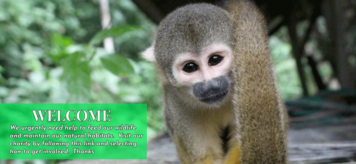 who supports animal protection efforts, local animal shelters in your city?  Get Involved visit  https://t.co/mjLZyjy25b  #wildlifesafari #safari #wildlife_aroundworld  #WorldWildlifeDay https://t.co/F4UdAcUPM7