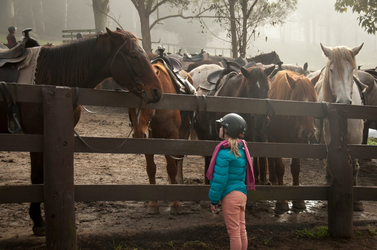 'Contracts are not just limited to humans, they should be in place for animals too' Terri Brosnan @ChildVisionVI talking best practice in equine assisted therapy. In a #EAT #AAI programme you should know when your horses will have breaks, when they will have holidays #SCAS2020 https://t.co/nJ9v3rlYPu