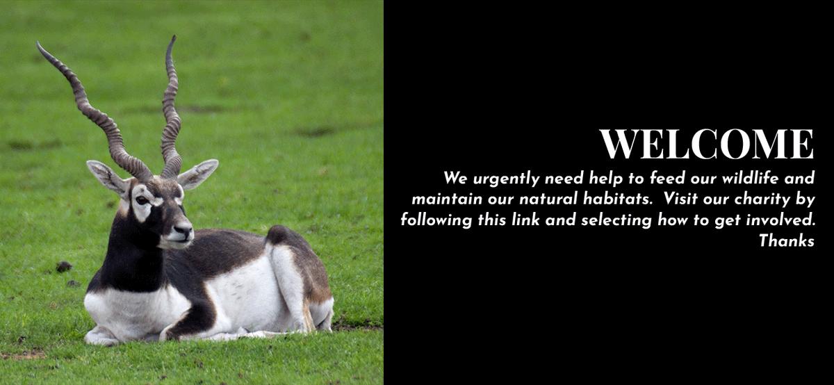 SAVE AN ANIMAL OR A SPECIES, IT'S EASY TO HELP WILDLIFE SANCTUARIES.  GET INVOLVED.  https://t.co/mjLZyjy25b #wildlifesafari #safari #wildlife_aroundworld  #WorldWildlifeDay https://t.co/R22FQ23uY5