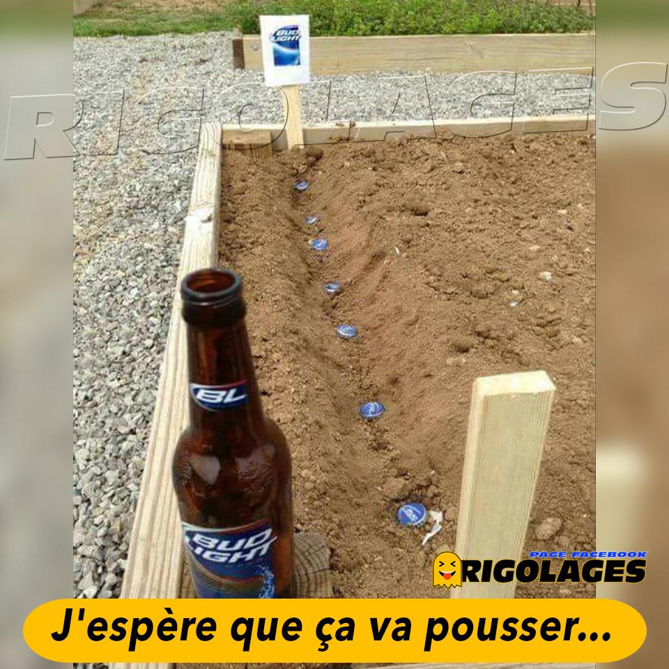 #humour #rigolages #biere #potager #jardin #cultiver #pousser #alcool https://t.co/UhGZ1su4A4