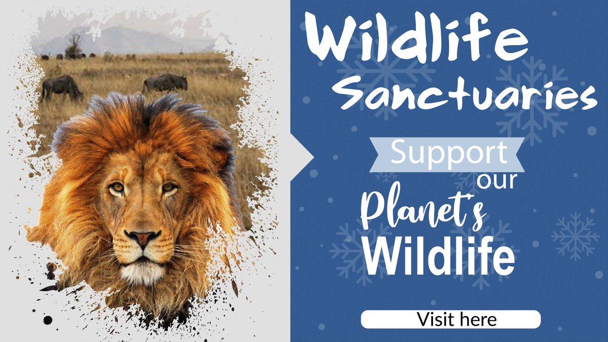 PennySaver | HELP WILDLIFE SANCTUARIES  #wildlifesafari #safari #wildlife_aroundworld  #WorldWildlifeDay   https://t.co/Zg7K9n36zd https://t.co/nvs1ElHzBS