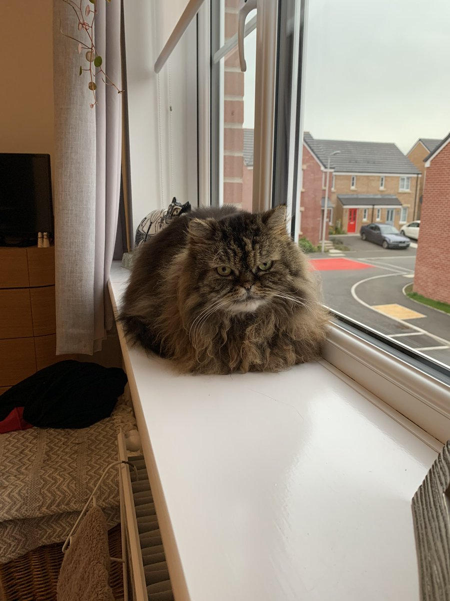 Pals! I did it! I baked the purrfect loaf! #kittyloafmonday   @Cleo_sMommy @Tonithecat32 @nesjloch @BloomNight2 @GordonHarmony @Joeybird https://t.co/Hv25OiSN2h