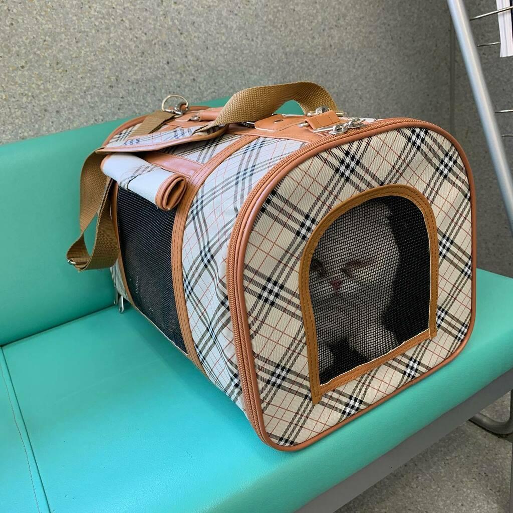 左目の調子が悪いなみちゃんを動物病院に連れて来ました😿 これから診察です😥 何事もなければいいのですが…💧  #ねこ #猫 #ネコ #猫のいる暮らし #猫のいる生活 #ねこすたぐらむ #cat #catstagram #catlover #貓 #スコティッシュフォールド #しろねこ #ねこ好きさんと繋がりたい #こんにちは #ゆるい https://t.co/cbBj1RuPOZ