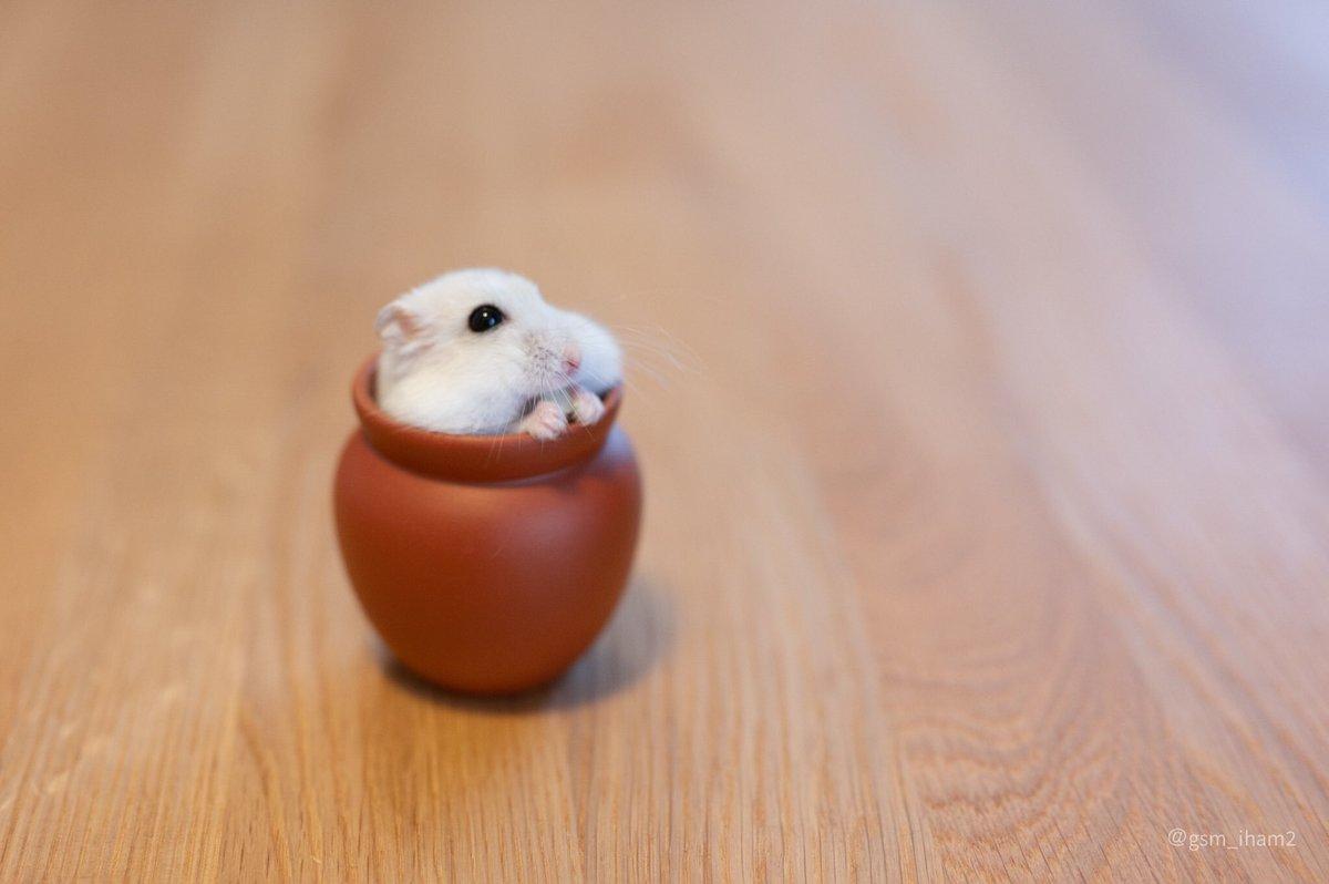 壺で食べてから出てくるところ。