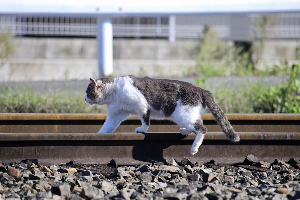 三ヶ尻線甲種輸送の撮影中に突然乱入してきました。線路を横断する行為は大変危険ですので絶対にやめましょう。注意してもシカトして行ってしまったので晒します。