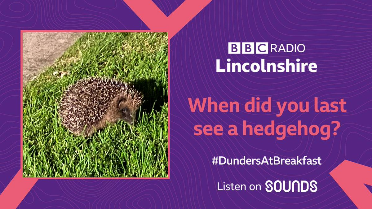 We're celebrating Lincolnshire's nature on Monday's #DundersAtBreakfast as @WildlifeTrusts announce a £30million appeal to expand nature reserves, with 1 in 4 UK mammals in danger.  When did you last see a hedgehog, red squirrel or water vole?  @LincsWildlife https://t.co/JbWFdepG7u