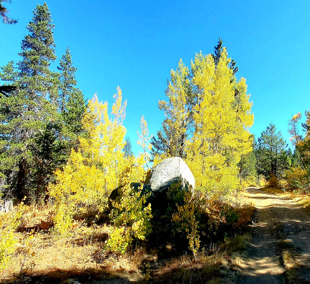 Had a really great 8 mile hike today behind #TahoeDonner with friends Mike and Wendy. Delightful weather, amazing scenery and friendly conversation.  #LoveTruckee #TahoeBasin https://t.co/QKYJat9ITg