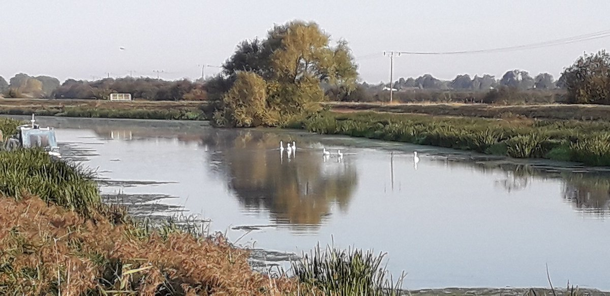 Audrey captured this lovely picture of some #swans on the River Witham, the water was so still and created some great #reflections #artphoto #Lincolnshire #LincsConnect #MondayMotivation @OPOTY @CanalRiverTrust https://t.co/zMuqNhCwRj
